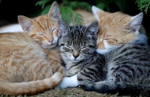 koty, kotki, koteczki