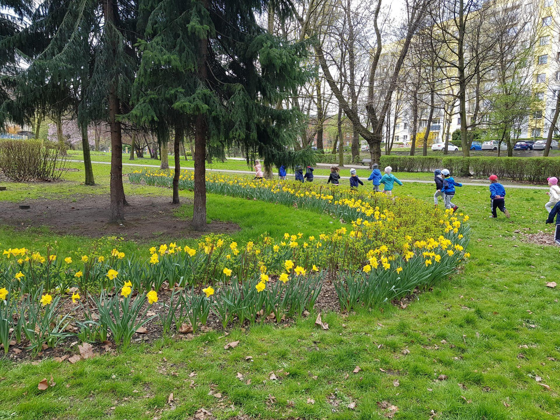 Spacerujemy i przyrodę wiosenną poznajemy.