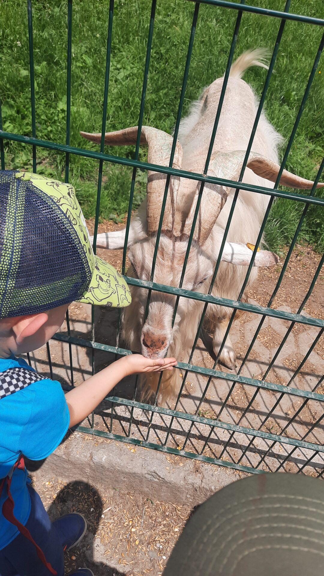 Czy to jeleń czy to dzik? Wycieczka do Parku Leśnych Niespodzianek